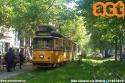 4731 sul 16 ripresa in mezzo agli alberi di viale Umbria. (15-5-'19)