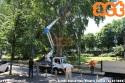 Pronto intervento di ATM e dell'impresa affidataria della manutenzione arborea per rimuovere un ramo caduto in via Vittorio Veneto. (05-07-'20)